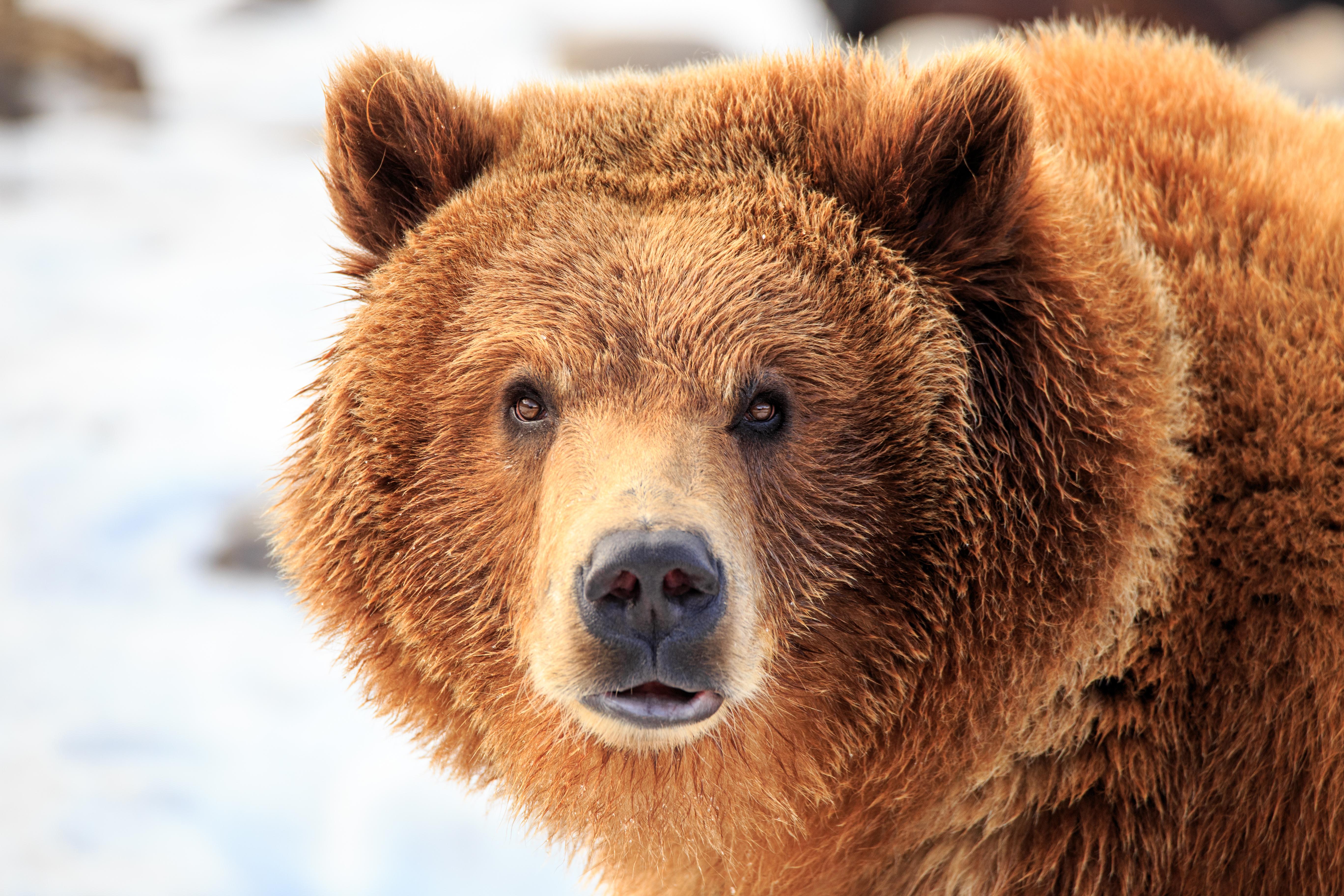 grizzlybeer - wild van freek